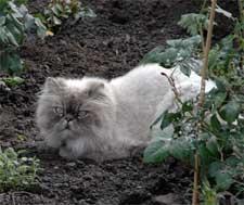 Katze passt auf